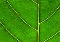 Pattern Of Green Leaf