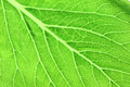 Pattern Of Green Leaves In A M...