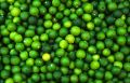 Pattern Of Green Limes