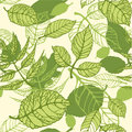 Pattern of green summer leaves Royalty Free Stock Image