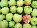 Pattern made of apples (grushovka) Stock Image