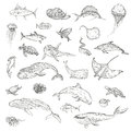 The pattern of marine animals. Royalty Free Stock Photo