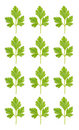 Pattern from parsley Stock Photography
