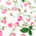 Pattern with pink roses, buds and leaves on white background. Flat lay, Top view. Roses flowers texture, woman day Royalty Free Stock Photo
