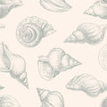 Pattern of seashells vector patern the various hand drawn Royalty Free Stock Image
