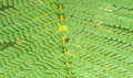Pattern of Small Bracken Leaves use for background Royalty Free Stock Photo