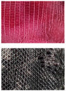 Pattern snake skin leather Stock Photos