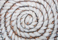The Pattern spiral of silkworm cocoon Royalty Free Stock Photo