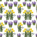 Pattern of spring flowers on a white background.