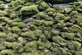 Pattern and texture background of old stone wall covered with clumps of green moss Royalty Free Stock Photo