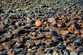 Pattern, texture or background of wet stones lying on a beach Royalty Free Stock Photo