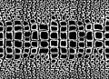 Pattern texture repeating seamless monochrome black and white. Crocodile skin. animal cobra, skin, pattern, snakeskin, pyth