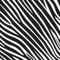 Pattern texture tiger zebra white stripe black jungle safari Royalty Free Stock Photo