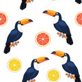 Pattern with toucan and citrus. Vector seamless texture.