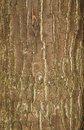 Pattern - tree trunk Royalty Free Stock Photo