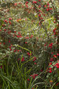 Pattern of the web in the garden in autumn  morning Royalty Free Stock Photo