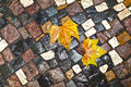 Pattern of wet cobblestones with leaves on sidewalk Stock Image
