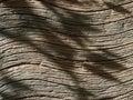 Pattern of wood like stone Royalty Free Stock Photo