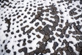 Patterned walkway with snow paving stones covered Royalty Free Stock Photo