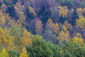 Patterns of colourful trees with autumn foliage photo a several in Stock Photo