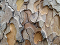 Patterns in ponderosa pine bark the flaking of a tree Royalty Free Stock Images