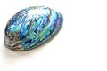 paua shell Royalty Free Stock Photo