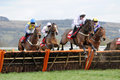Paul carberry solwhit win cheltenham Royalty Free Stock Photography