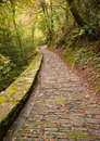 Paved road in fragas do eume natural park in vertical compositio pontedeume galicia spain Stock Image