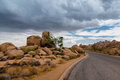 Paved Road at Joshua Tree National Park