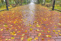 Paved sidewalk with autumn foliage Royalty Free Stock Photos