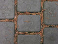 Paving slabs of gray pine with needles Stock Photography