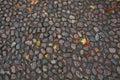 Paving stone autumn texture Royalty Free Stock Photo
