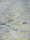 Paving stones and grass Stock Photos