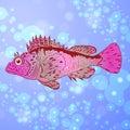 Pavão do mar marinho Foto de Stock Royalty Free