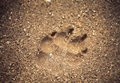 Paw Print Royalty Free Stock Photos
