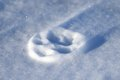 Paw print close up of a on a frozen snow drift Stock Photography