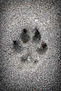 Paw print in sand Stock Photo