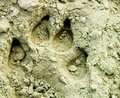 Pawprint Royalty Free Stock Photography