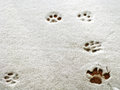 Pawprints in snow cat a fresh light snowfall on a wooden surface copyspace Stock Photo