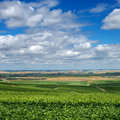 Paysage de vignoble france Photo libre de droits