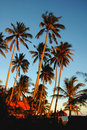 Paysage tropical Photographie stock libre de droits