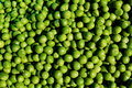 Pea grains Royalty Free Stock Photo