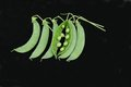 Pea Pods. Stock Photography