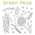 Pea Pods And Pods Vector Illus...