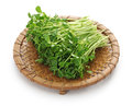 Pea shoots, chinese vegetable Royalty Free Stock Photo