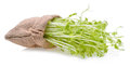 Pea Sprouts Royalty Free Stock Photo