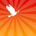 Peace dove Royalty Free Stock Photos