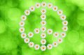 The peace and love symbol made in daisy flower on green background Royalty Free Stock Photos