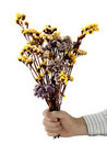 Peace offering - man with dried flowers over white Royalty Free Stock Photo