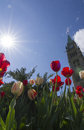 Peace tower sun and tulips in ottawa canada the on parliament hill ontario during the canadian tulip festival Stock Image